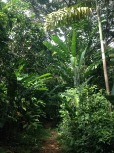 rainforest la cusinga